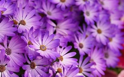 Purple Floral Wallpapers Desktop Flowers Freecreatives Patterns