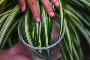 How, To, Clean, Your, Indoor, Houseplants, 6, Steps, With, Pictures