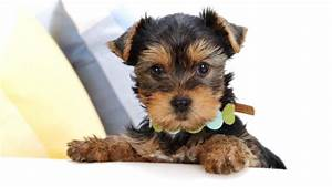 Cute and Adorable Puppy Pictures | Cuteness Overflow