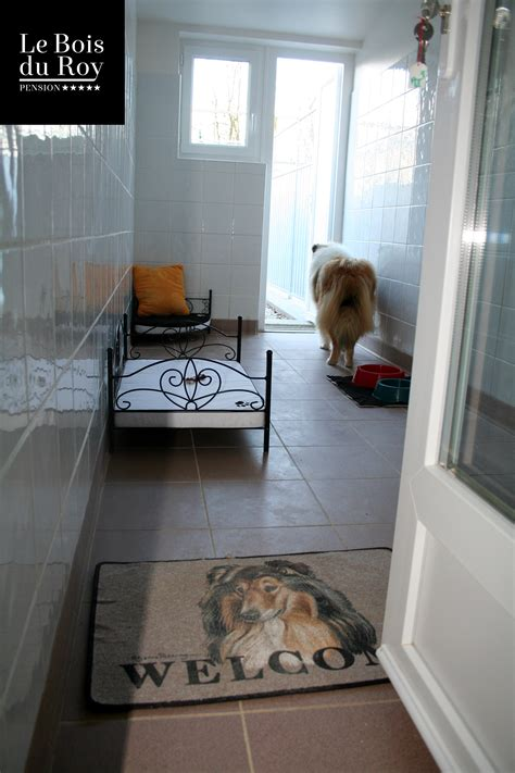 beautiful chambre pour chien images matkin info matkin