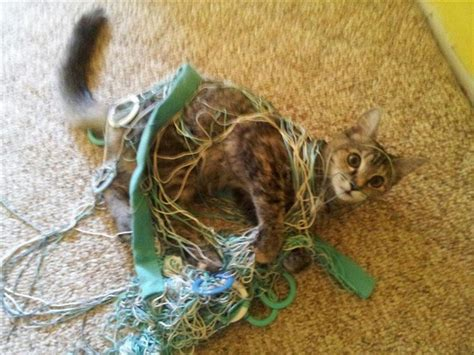 hilariously guilty pets caught   act