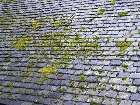 mousse sur toiture tuiles demoussage toiture avec le mosskade 100 naturel et sans