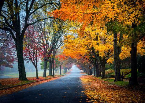 trees, Path, Road, Nature, Fall, Leaves, Autumn, Splendor ...