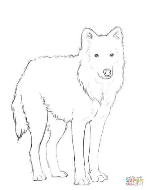 arctic wolf coloring page  printable coloring pages