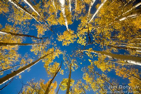 Fall Color Reports