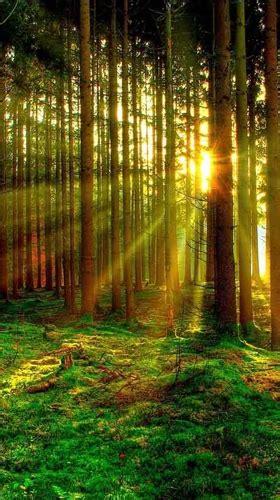 forest  fuer android kostenlos herunterladen