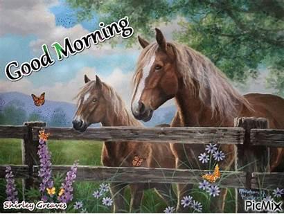 Morning Horse Animated Picmix