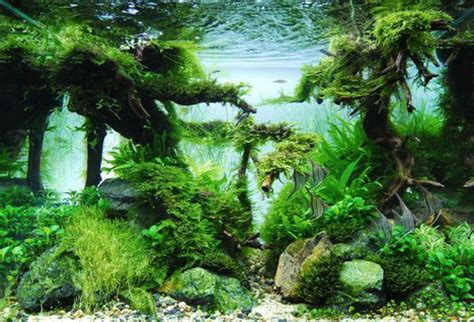 Aquascape Wallpaper by Beautiful Aquascaping Photo Collection Quertime