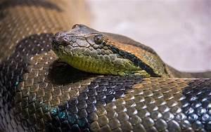 10-foot-long Snake Blocks Brazilian Highway, Drivers Help ...