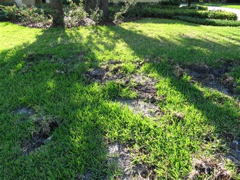 22 Best Images About Florida Lawn Issues On Pinterest