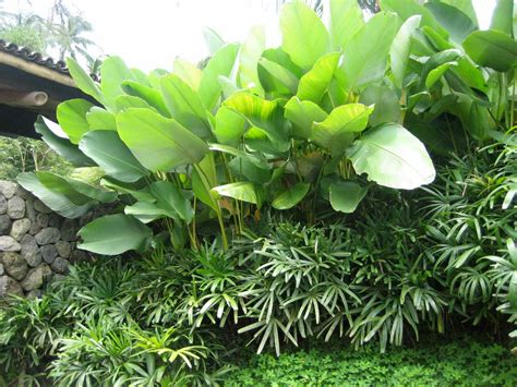 1000+ Images About Tropical Garden On Pinterest