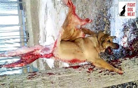 graphic video dog tied   tree howls  pain