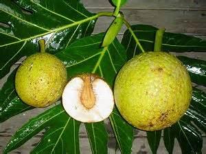mini chambre de pousse les fruits exotiques et tropicaux des iles que l 39 on