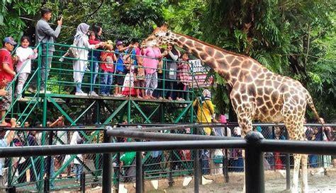 fakta menarik tentang kebun binatang surabaya