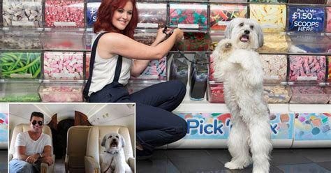Pudsey The Movie Star On The Publicity Trail With British Cinema's New Top Dog  Mirror Online
