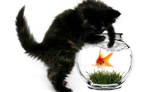 cat and fish cat and fish wallpapers and images wallpapers pictures