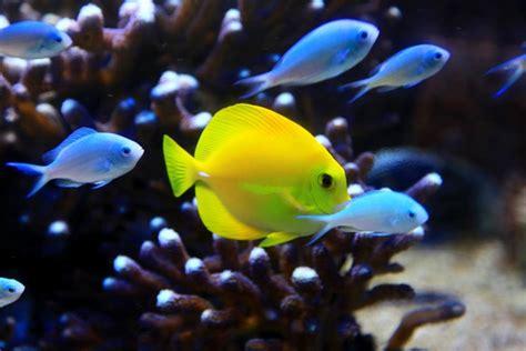 aquarium ile de noirmoutier aquarium sealand 224 noirmoutier la r 233 gion de noirmoutier hotel de charme les prateaux