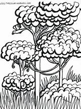 Rainforest Trees Drawing Coloring Pages Getdrawings sketch template