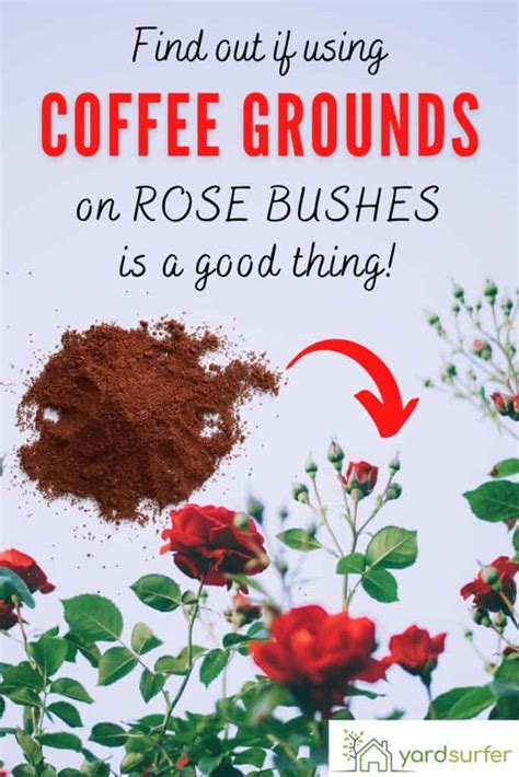 Are coffee grounds a good mulch to use around plants? Are Coffee Grounds Good For Roses? | Yard Surfer