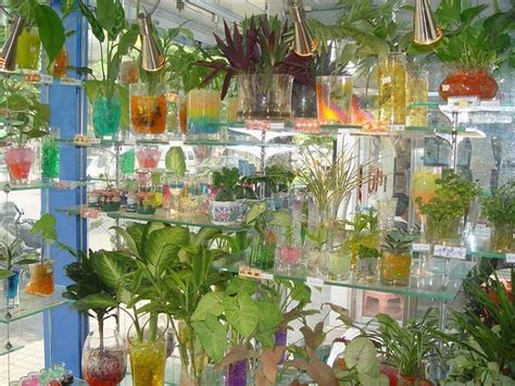 foto tanaman hias hidrogel  meja tanaman  media