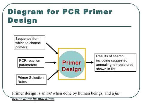 pcr primer design pcr primer desining