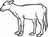 Coloring Cow Ternero Calf Colorear Dibujo Printable Hereford Colorare Dibujos Kolorowanki Realistic Disegni Krowy Kalfje Imprimir Farm Animal Kalb Kleurplaat sketch template