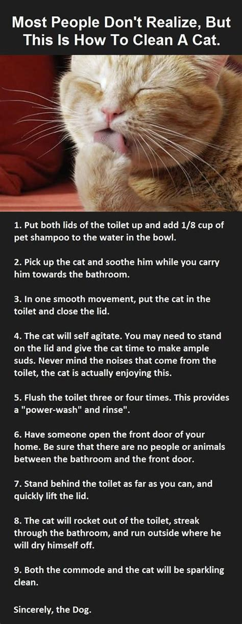 clean  cat random overload pinterest cat