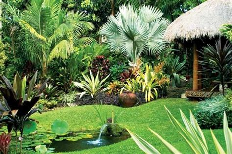 plants idea  modern tropical garden  ideas