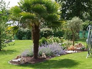Palmier De Jardin : deco palmier jardin d co jardin avec palmier deco jardin ~ Nature-et-papiers.com Idées de Décoration