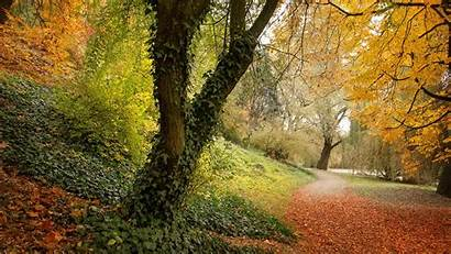 Fall Wallpapers Backgrounds Leaves Graphic Downloads Wallpapersafari