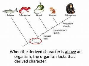 Cladograms