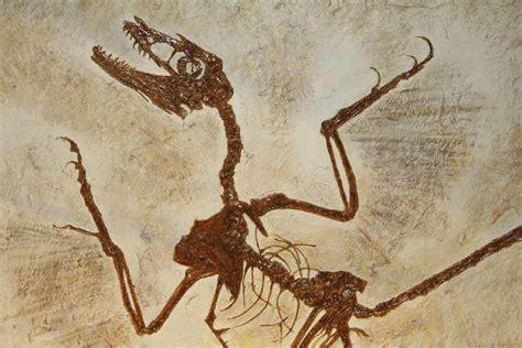 teach  family  fossils  tasty  national