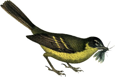 Clipart Bird Pretty Yellow Bird Clip The Graphics