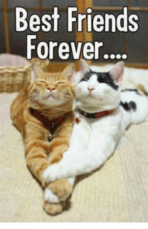 Friends Forever Meme - 25 best memes about best friends forever best friends forever memes