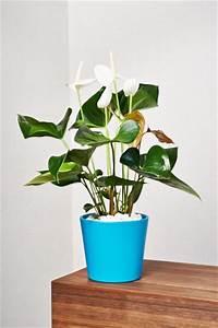 Hydrokultur Shop Online : 250 best images about zimmerpflanzen auf pinterest kaktus haus und pflanzen ~ Markanthonyermac.com Haus und Dekorationen