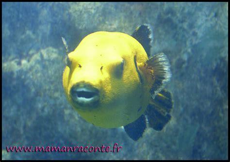 visiter l aquarium de lyon avec un enfant les cahiers de