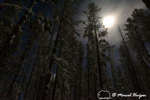 Marcel Huijser Photography | Montana landscapes: Snowy forest at night, Chief Joseph Pass ...