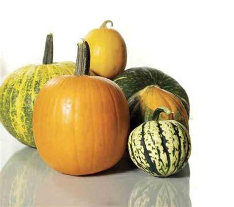types of pumpkins best pumpkin varieties for cooking real food mother earth news