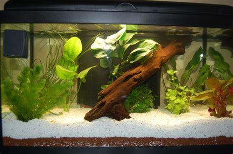 mein 60l aquarium images frompo