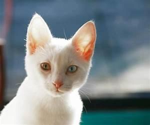 Comment Savoir Si Mon Ordinateur Est Surveillé : comment savoir si mon chat est albinos 6 tapes ~ Medecine-chirurgie-esthetiques.com Avis de Voitures