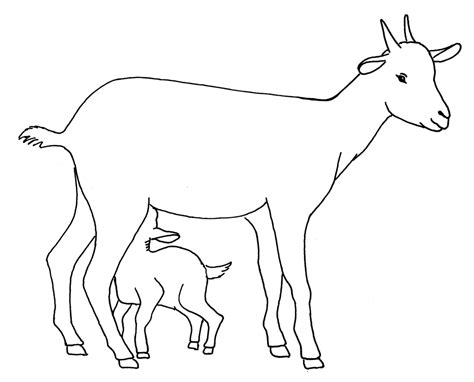 Pencil And In Color Drawn Goat For Kid Step By Step Animal Contoh Flowchart Web E-commerce Operasional Konversi Suhu Untuk Game Soal Looping Ya Tidak Fungsi
