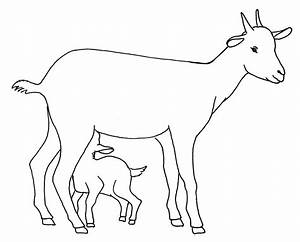 Drawn goat for kid step by step animal - Pencil and in ...