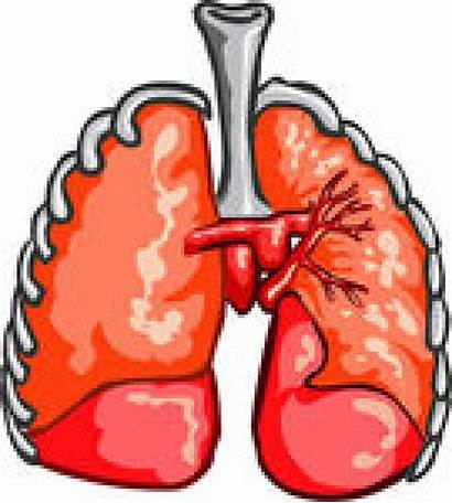 Clipart Lungs Healthy Lung Respiratory Clip Prepositions