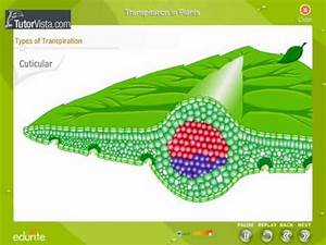 Transpiration In Plants - YouTube 5:43, Module 4 ...