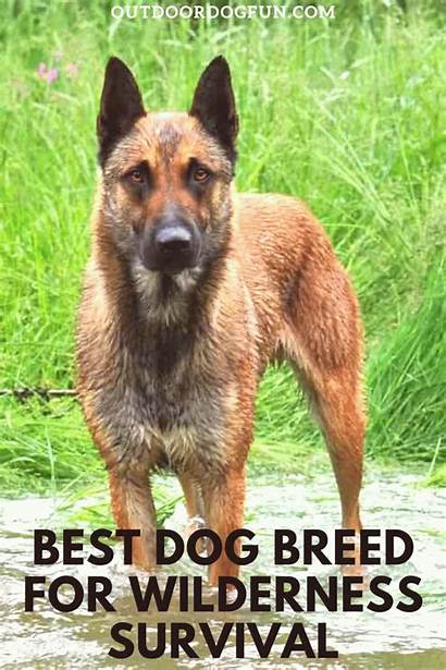 Dog Wild Breed Dogs Survival Provide Breeds