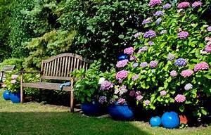 Sind Hortensien Winterhart : hortensien pflanzen standort hortensien im garten pflanzen m bel und heimat design inspiration ~ Orissabook.com Haus und Dekorationen