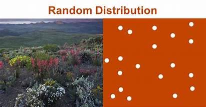 Distribution Ecology Population Chapter Random Class