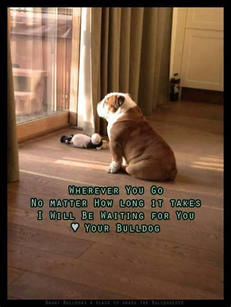meaty bulldog quotes bulldog bulldog funny