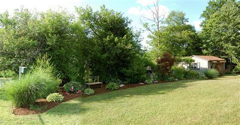 Trees Mixed With Shrubs Privacy Fence