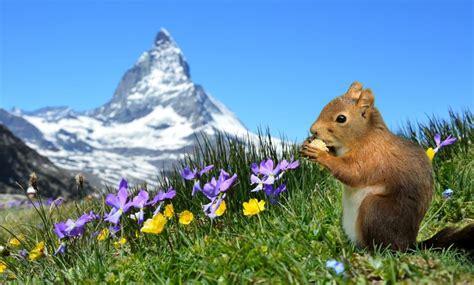 Schönen Urlaub Berge by Urlaub In Deutschland In Den Bergen Hier Wird Es Euch